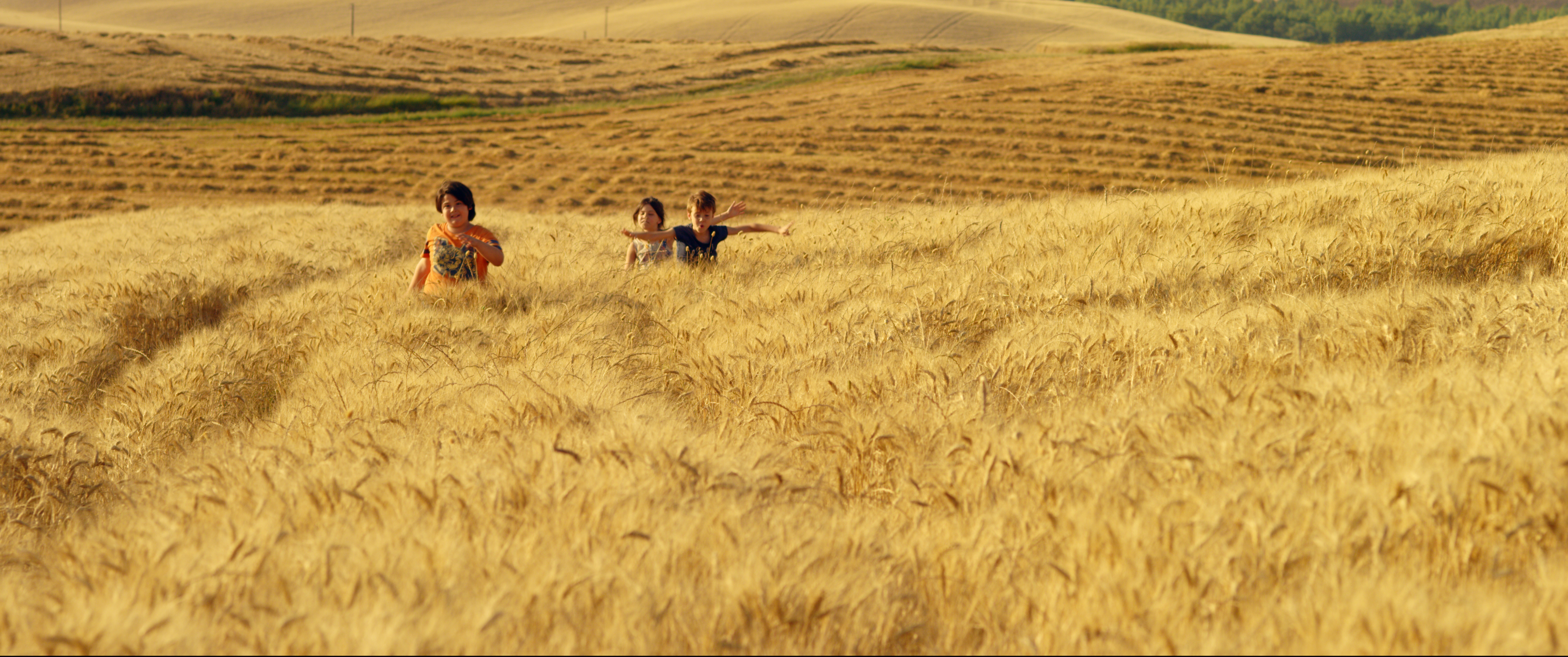SEA OF WHEAT – LOST IN A TUSCAN TALE